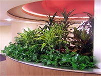 Plantopia - Indoor Plant Service, Office Plants, Rentals & Plant Maintenance Franchise